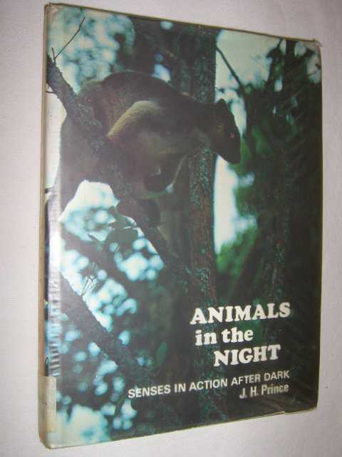 Image for Animals In The Night : Senses In Action After Dark