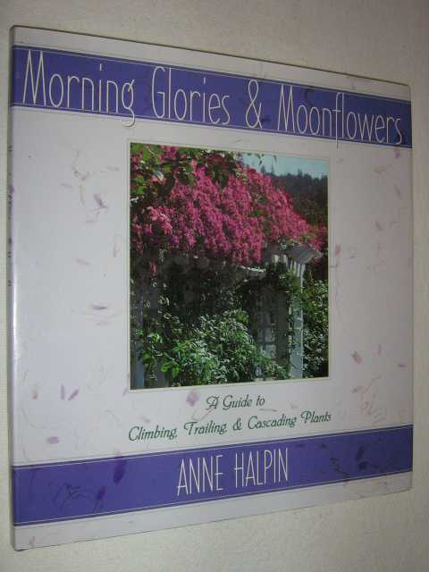 Image for Morning Glories and Moonflowers : A Guide to Climbing, Trailing, and Cascading Plants