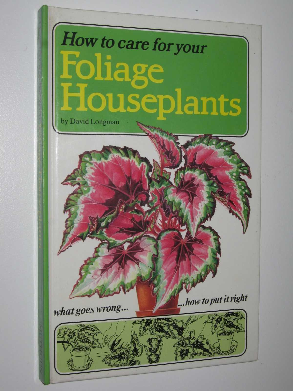 Image for How to Care for Foliage Houseplants